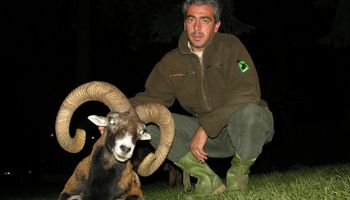 Mouflon Hunting Offer